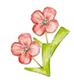 fiore-papaveri-e-papere